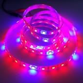 Red/Blue 4:1 5050 Plant Growing LED Strip Light Hydroponic 12V 5M
